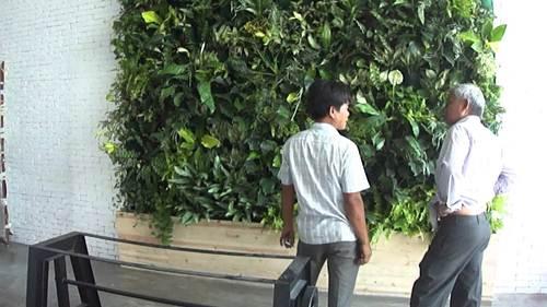Tường cây giả trong nhà