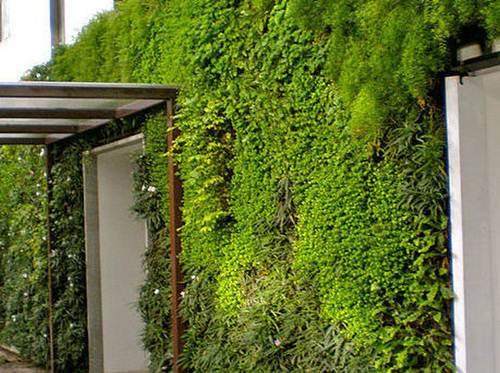 Tường cây xanh giả